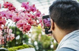 国际兰花节