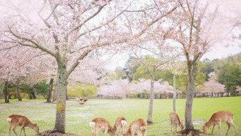 春天去奈良,只看鹿就亏大了!