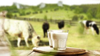"""中国奶业何时振兴?一杯""""数字奶""""背后,这家企业在追赶"""