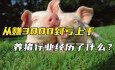 从赚3000到亏上千,养猪行业经历了什么?