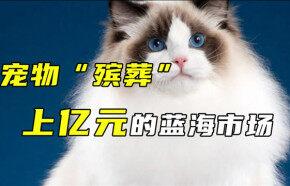 """宠物""""殡葬"""",上亿元的蓝海市场"""